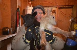 Shetland babies